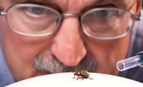 энтомолог