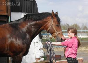коневод