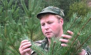 инженер-лесотехник